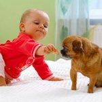Если домашняя собака укусила ребенка
